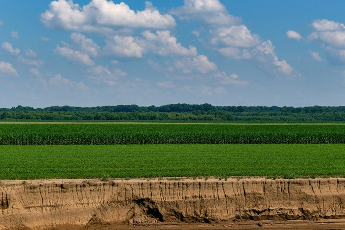 Landscape of green corn field along the ohio river near evansville, indiana