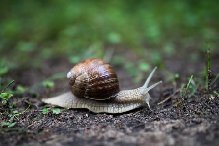 Snail crawling on the ground in spring
