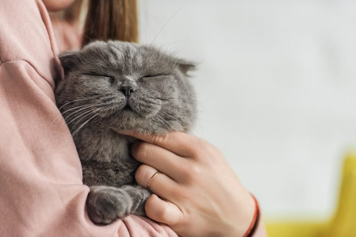 cropped shot of woman carrying adorable scottish fold cat