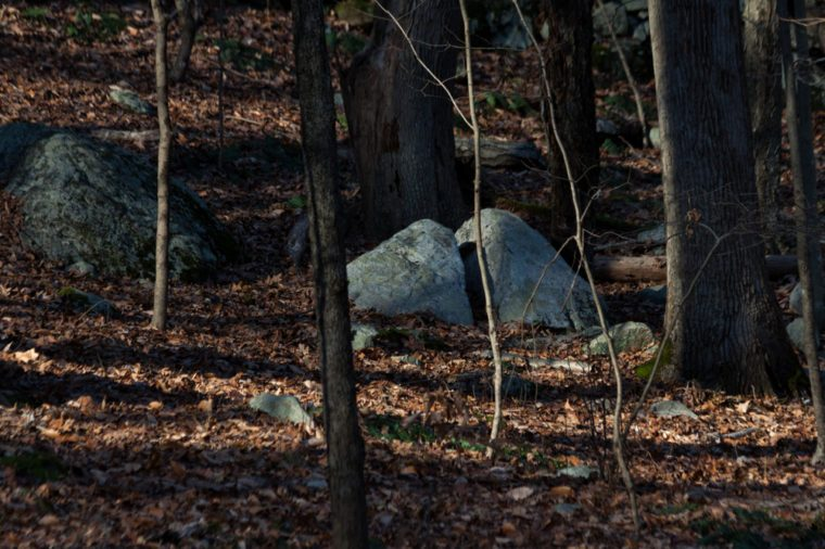 boulders and trees during autumn season