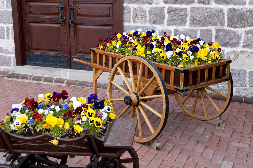 Wooden cart inside the flowers in capital ankara turkey