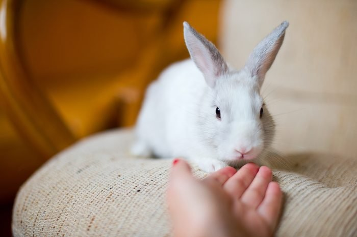 Portrait of adorable white bunny rabbit sitting on beautiful armchair, preparing to celebrate easter