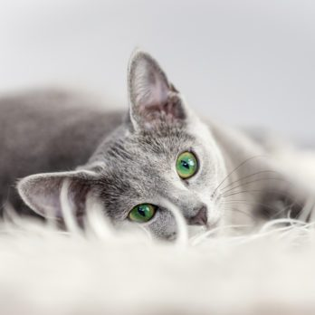 8 Sure Signs Your Cat Trusts You