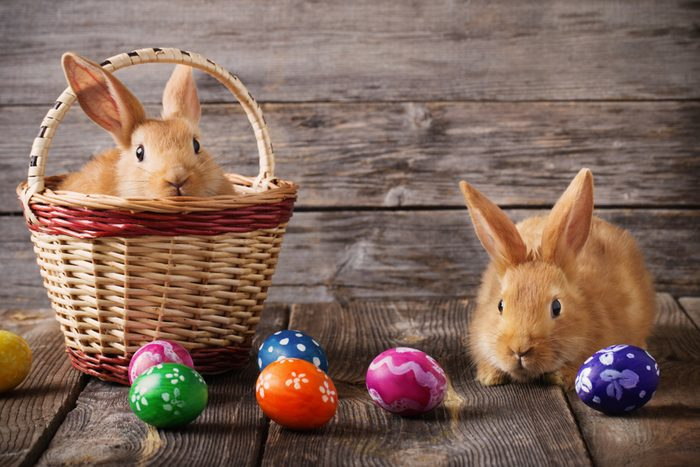 Easter bunny with eggs on wooden background