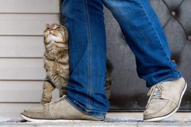 The cat and the owner. The cat pressed against the man's legs and trustingly looks