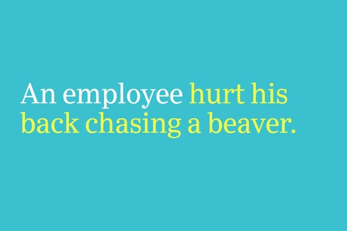 hurt his back chasing a beaver