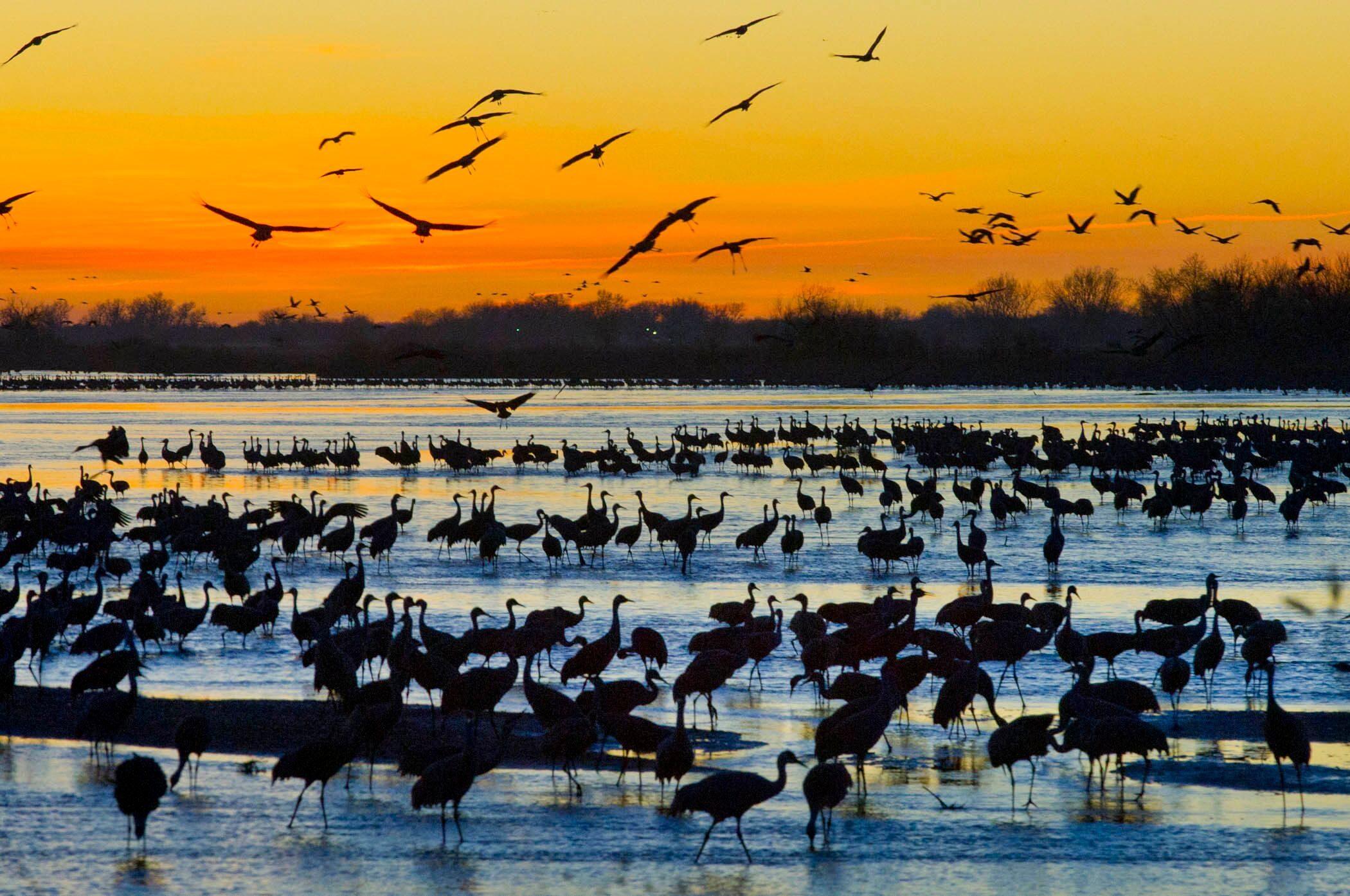 nebraska crane migration