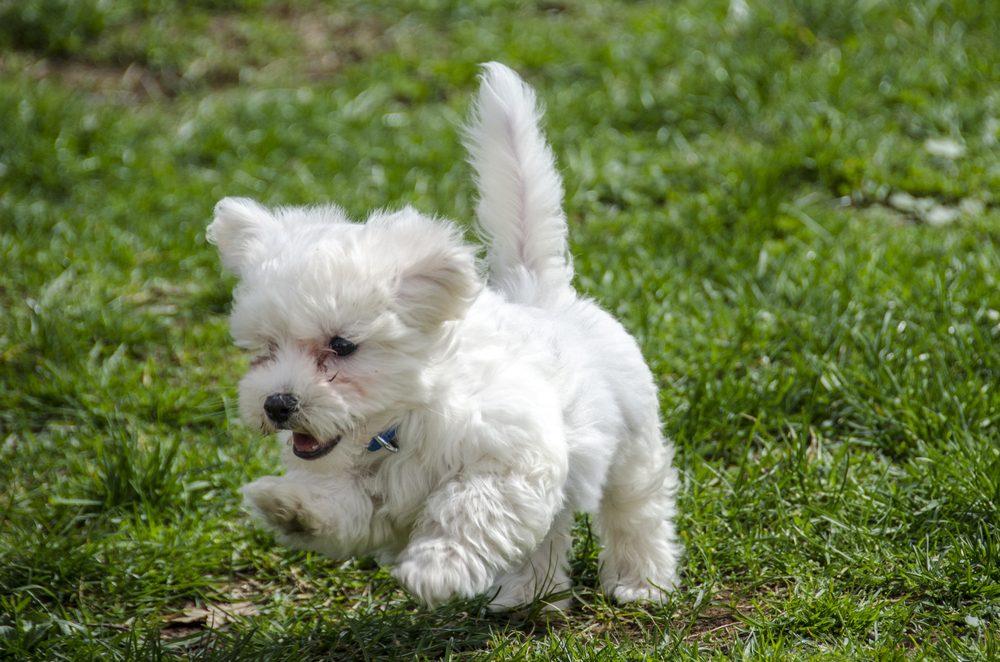 Cute puppy running in nature