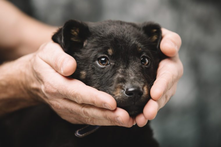 Beautiful little puppy in male strong hands.