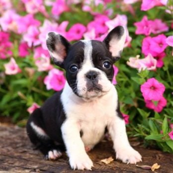 100 of the Most Popular Puppy Names