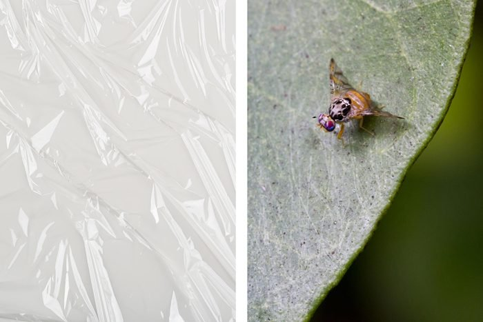 plastic wrap fly