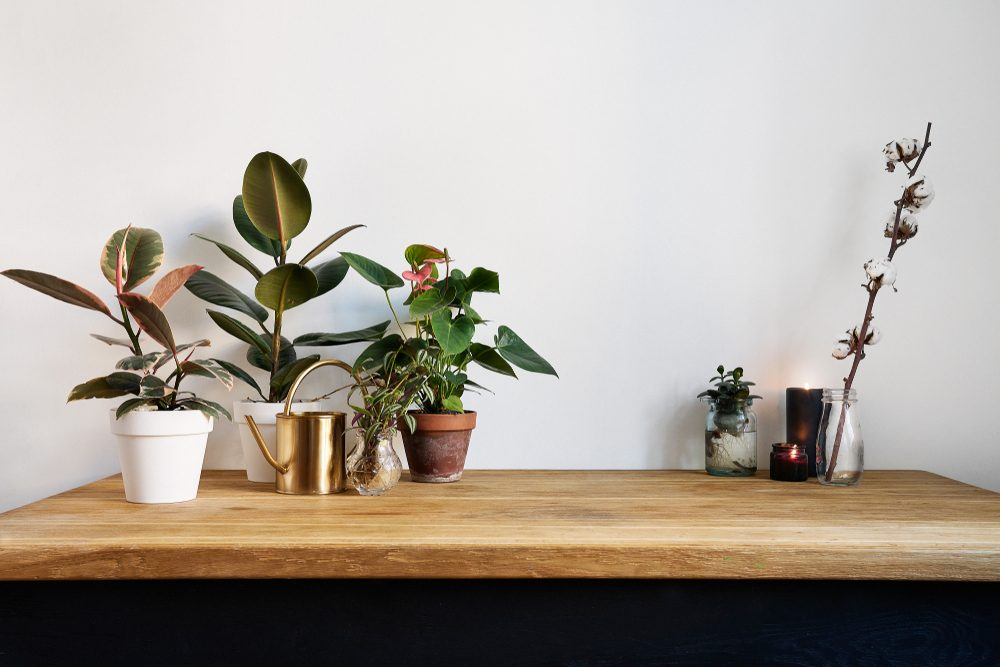 White kitchen interior with green plants on rustic wooden table, modern workplace in nordic style