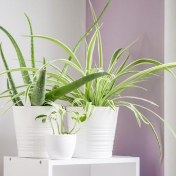The Best Air-Cleaning Plants, According to NASA