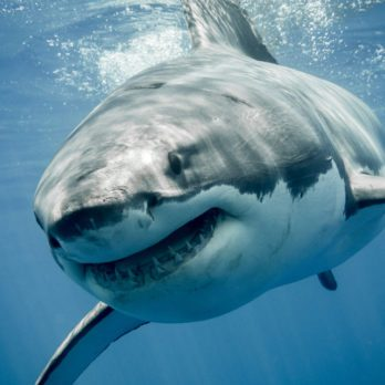 9 Animals That Aren't as Dangerous as You Think