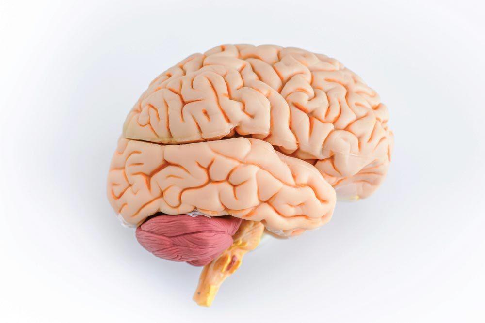 Do Brain Games Actually Work?