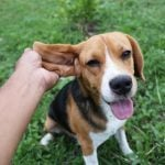 Here's How Often You Should Be Cleaning Your Dog's Ears