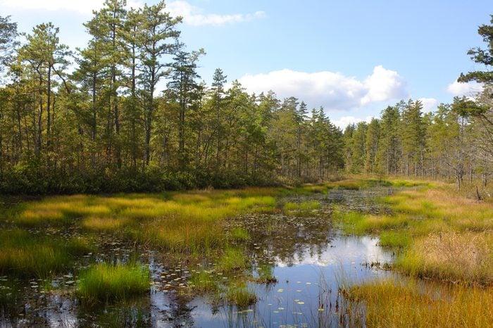 Pine Barrens bog