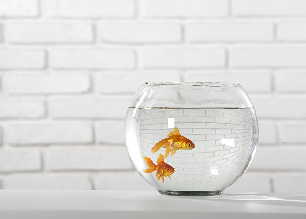 aquarium - goldfish