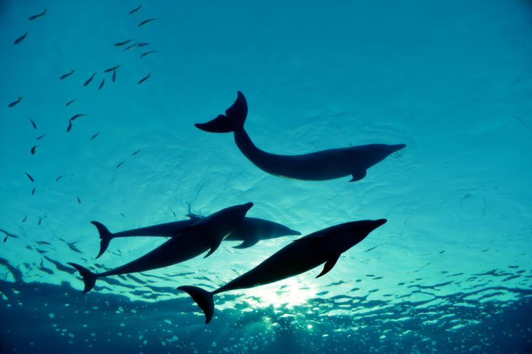 dolphin family swimming, underwater shot