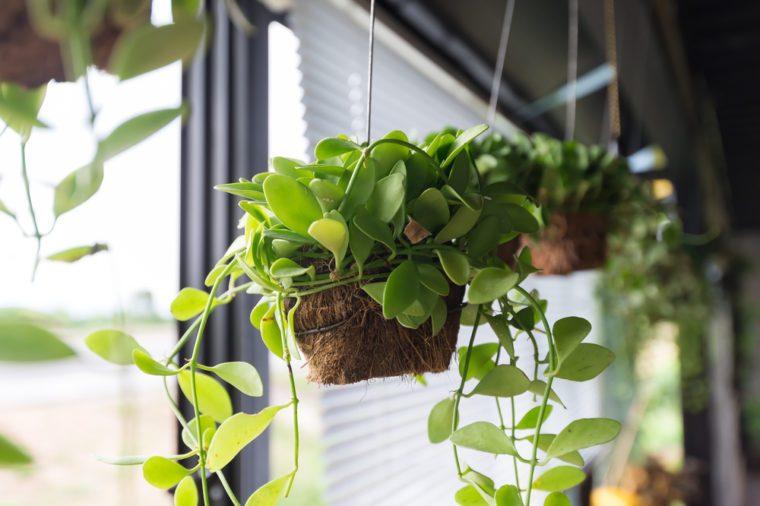 Flowerpots hanging on window sill