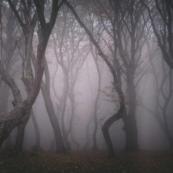 12 True Stories from the Most Haunted Forests in the World