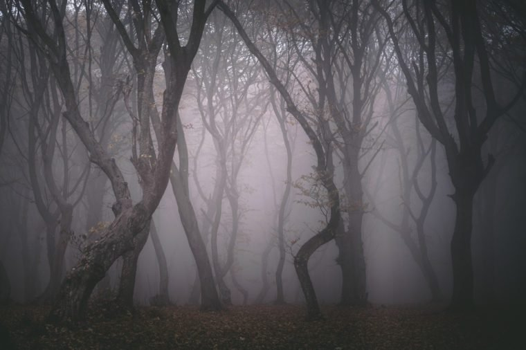 Hoia Forest