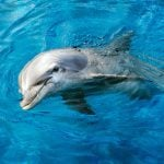 Why Dolphins Are the Second-Smartest Creatures on the Planet