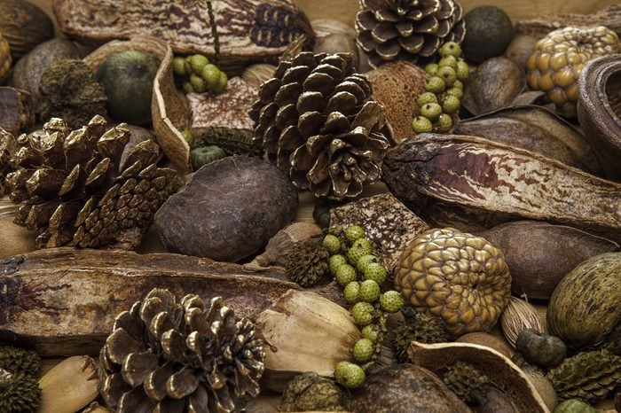 Seasonal Christmas Forest Spread. A selection of traditional Christmas potpourri items including golden pine cones, nuts and berries.