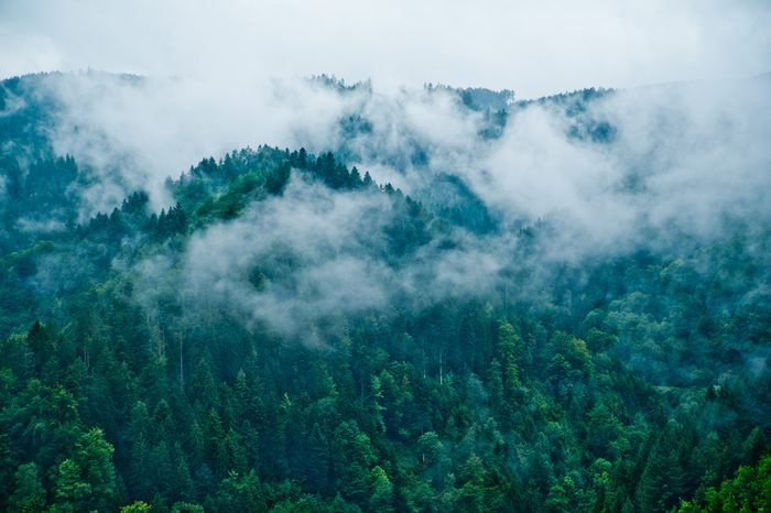 Deep mystical woods covered in spooky clouds (Black Forest / Schwarzwald)