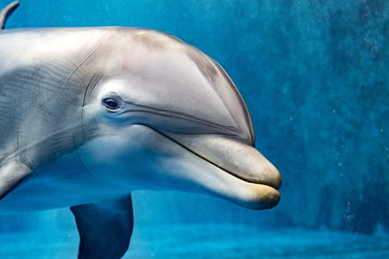 dolphin underwater portrait while looking at you