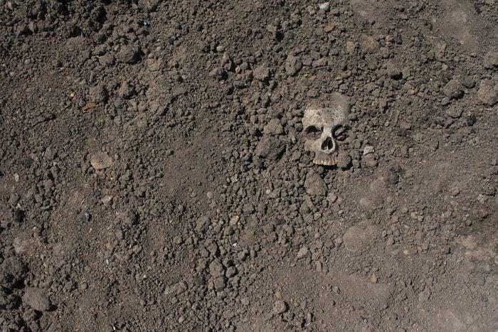 Skull in the ground