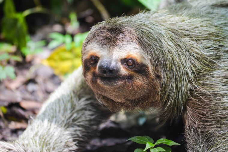 Sloth - Costa Rica - Wild - Jungle - Rainforest