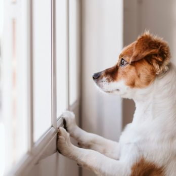 How Long Is It OK to Leave Your Dog Home Alone?