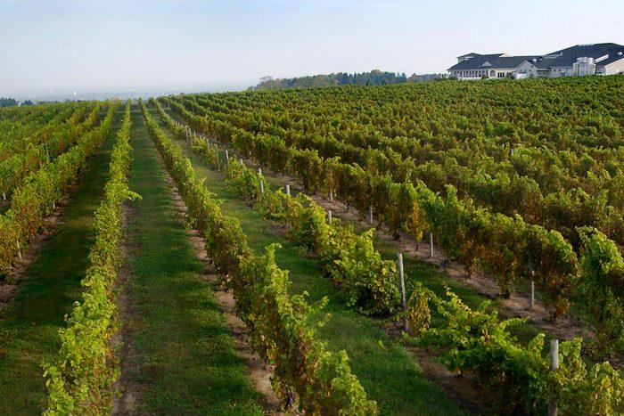 casa larga vineyard
