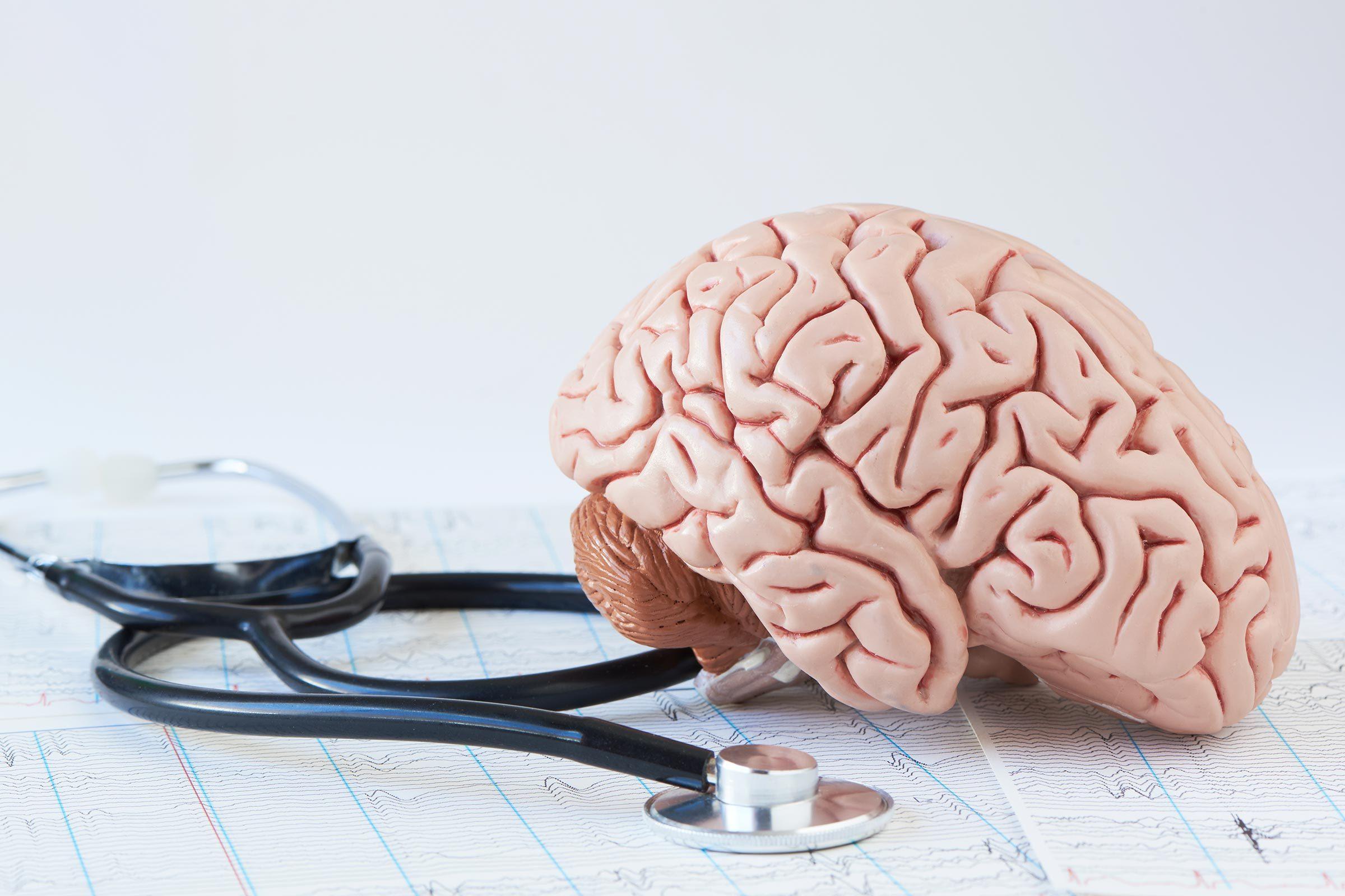 brain anatomical figure stethoscope