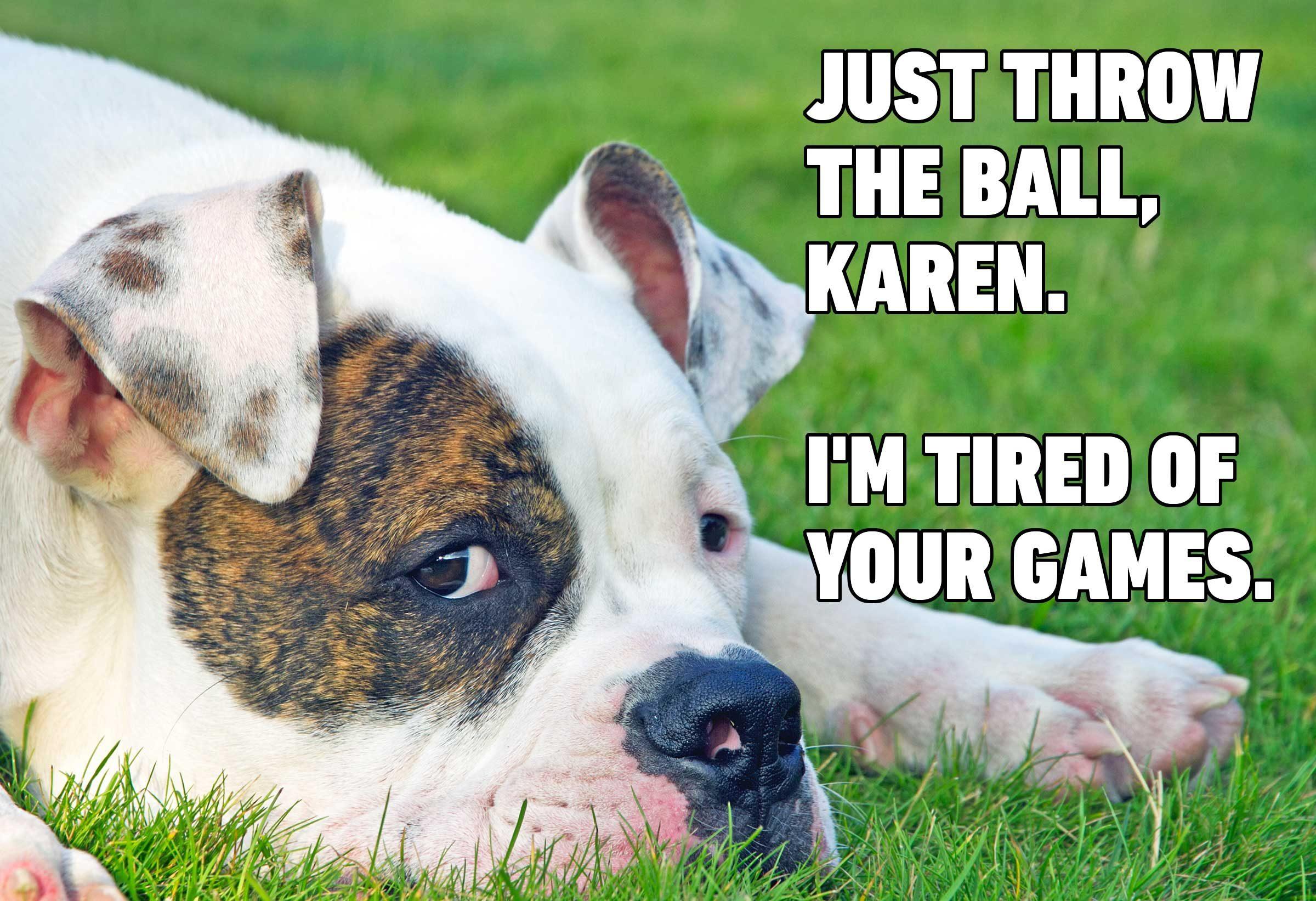 Hilarious Dog Memes You Ll Laugh At Every Time Reader S Digest,Pale Lavender Lavender Bedroom Walls