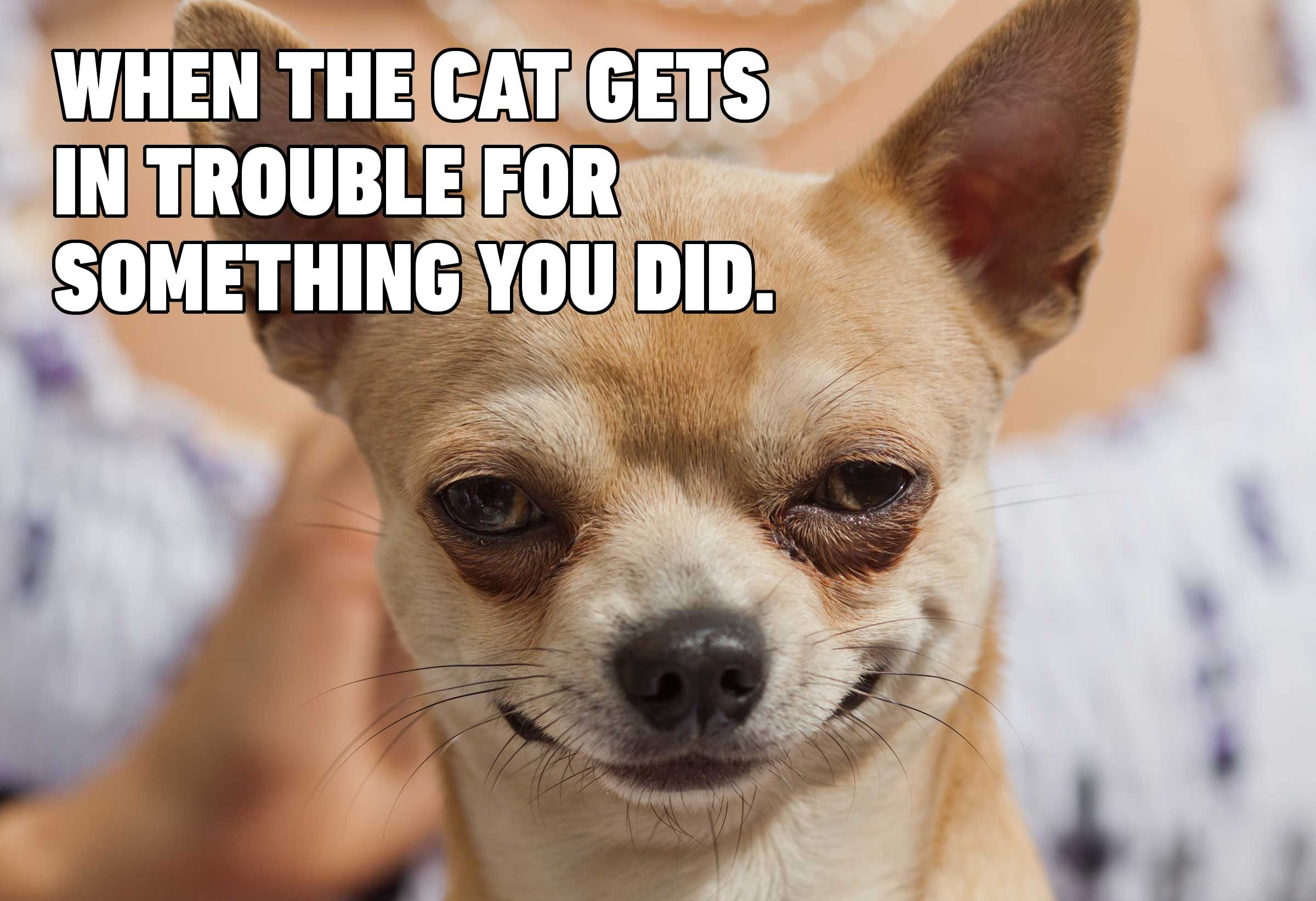 Hilarious Dog Memes You Ll Laugh At Every Time Reader S Digest