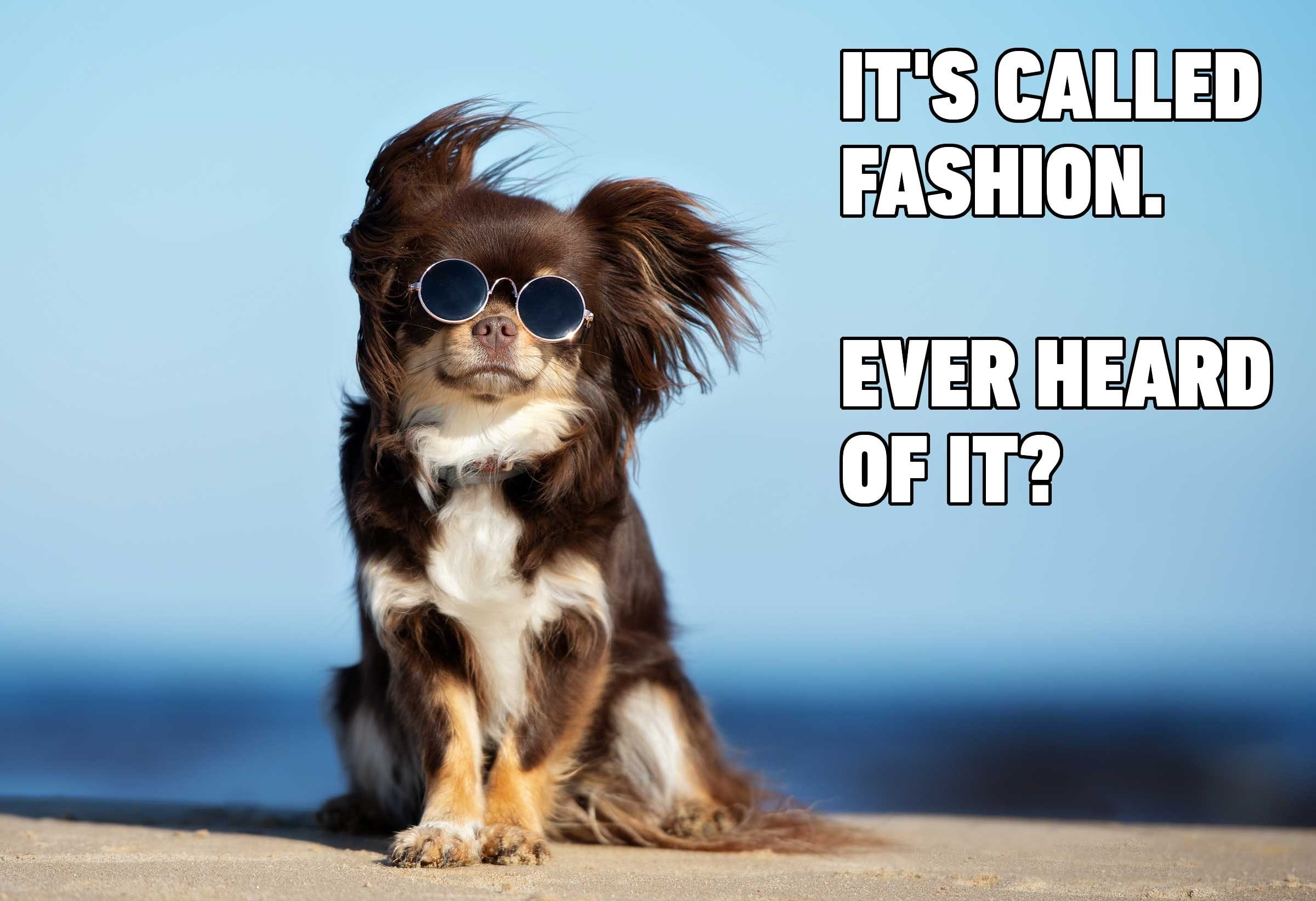 Hilarious Dog Memes You'll Laugh at Every Time | Reader's ...