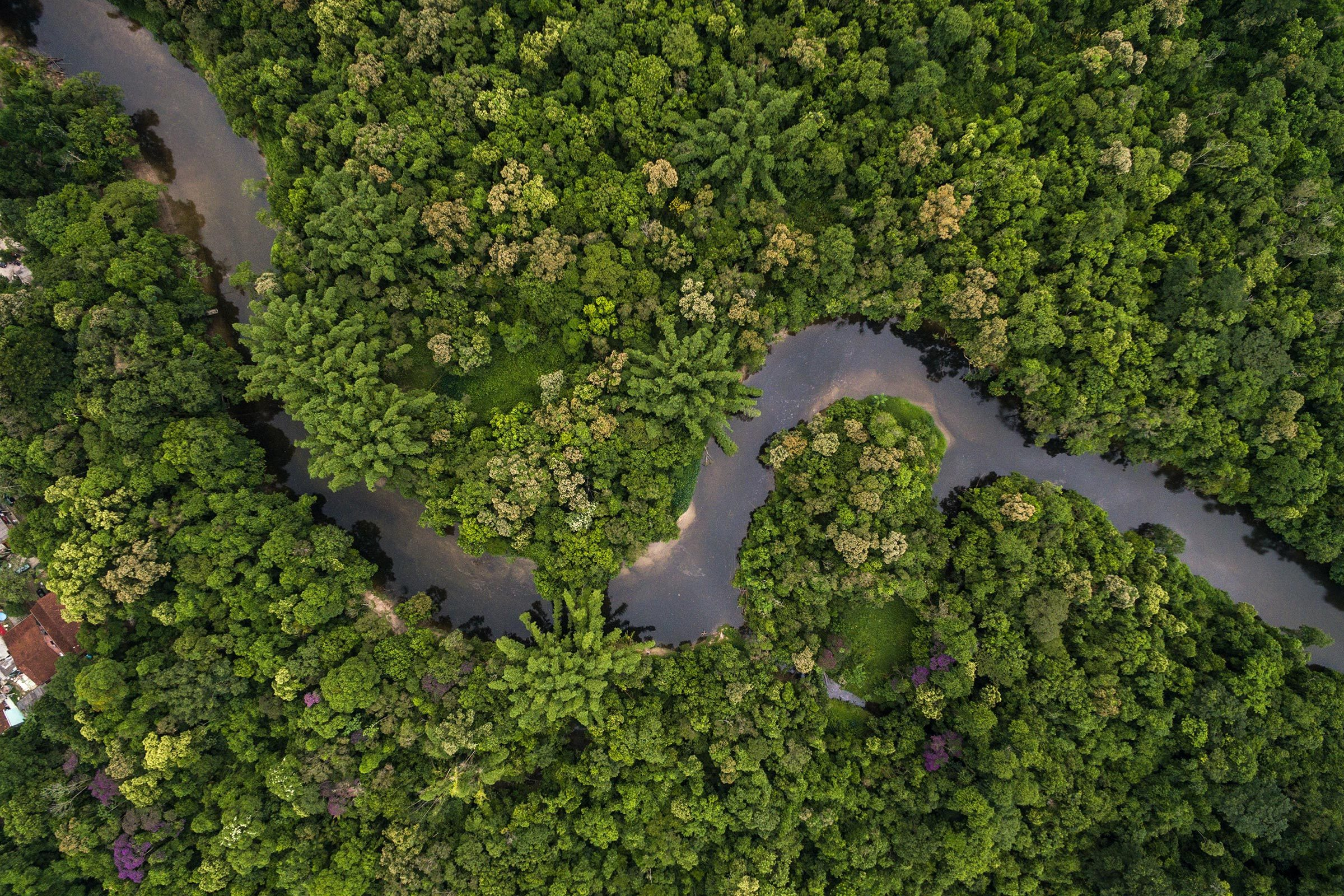 amazon river forest