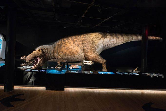 T Rex full model