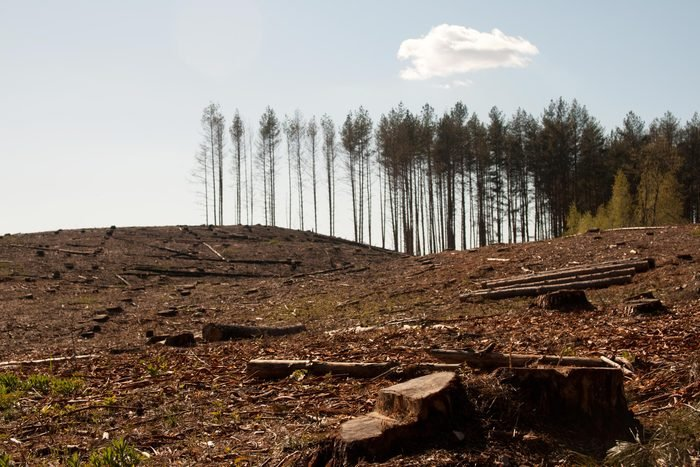 deforestation cut down trees