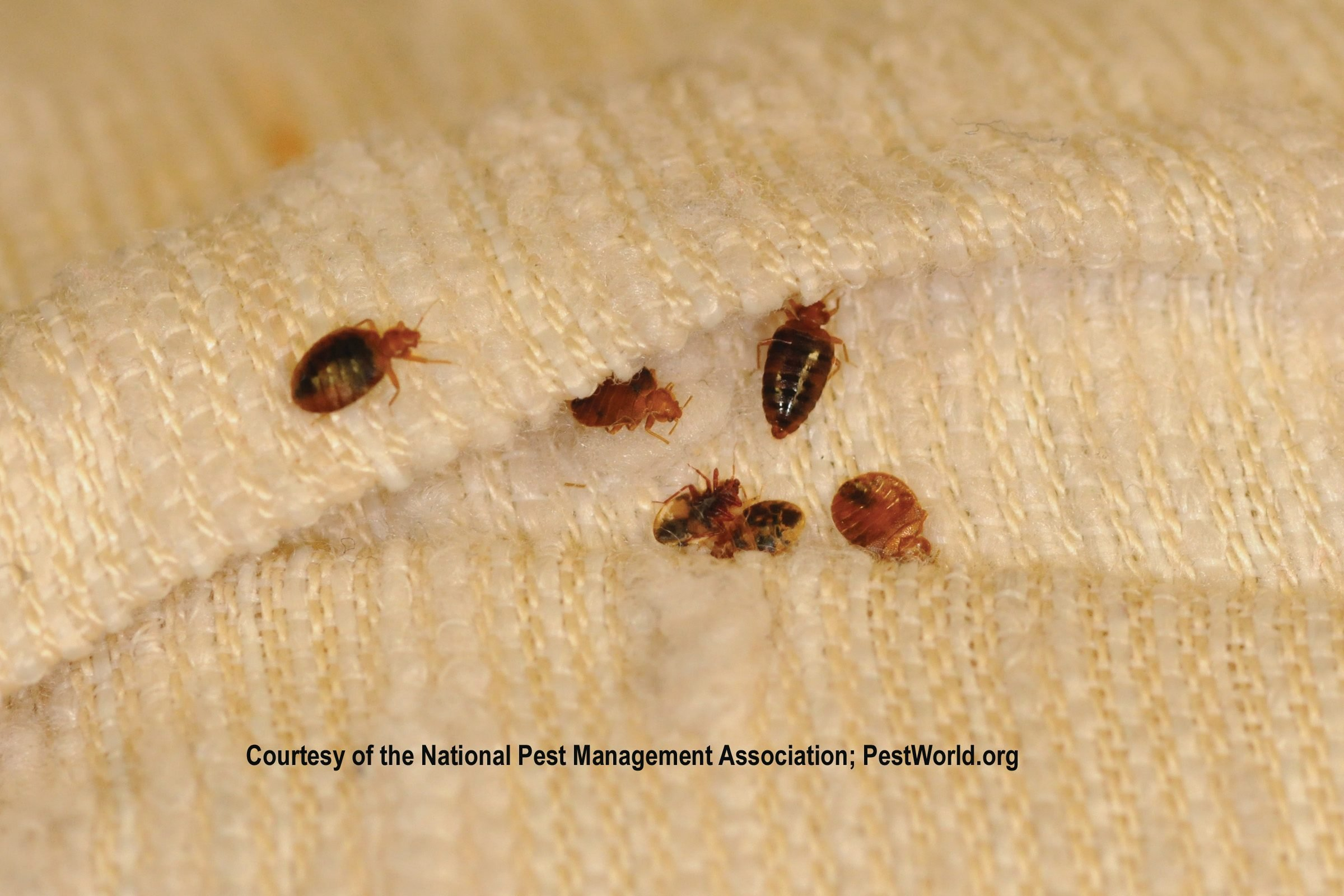 What Are the Signs of Bed Bugs?