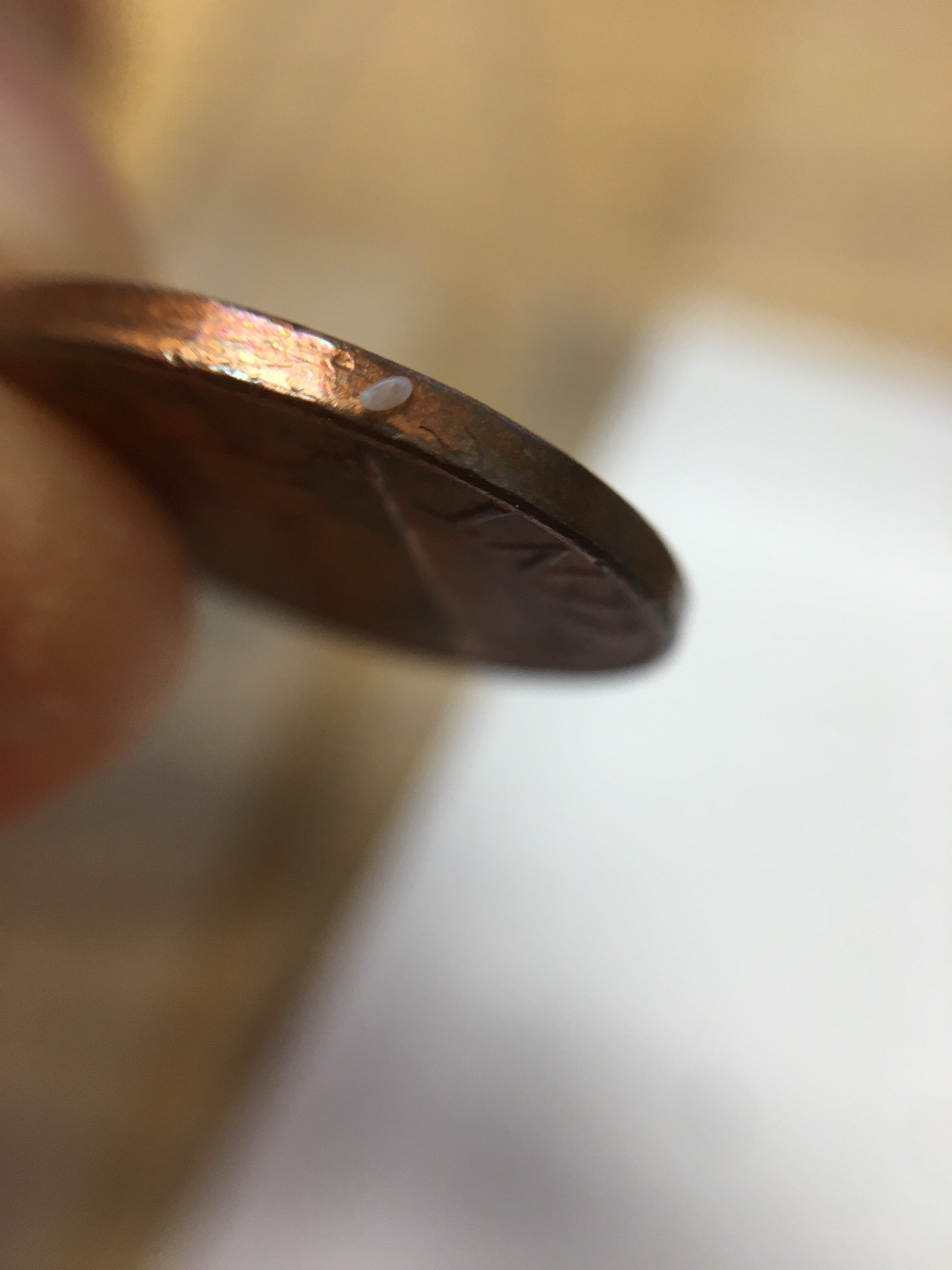 bed bug egg on penny