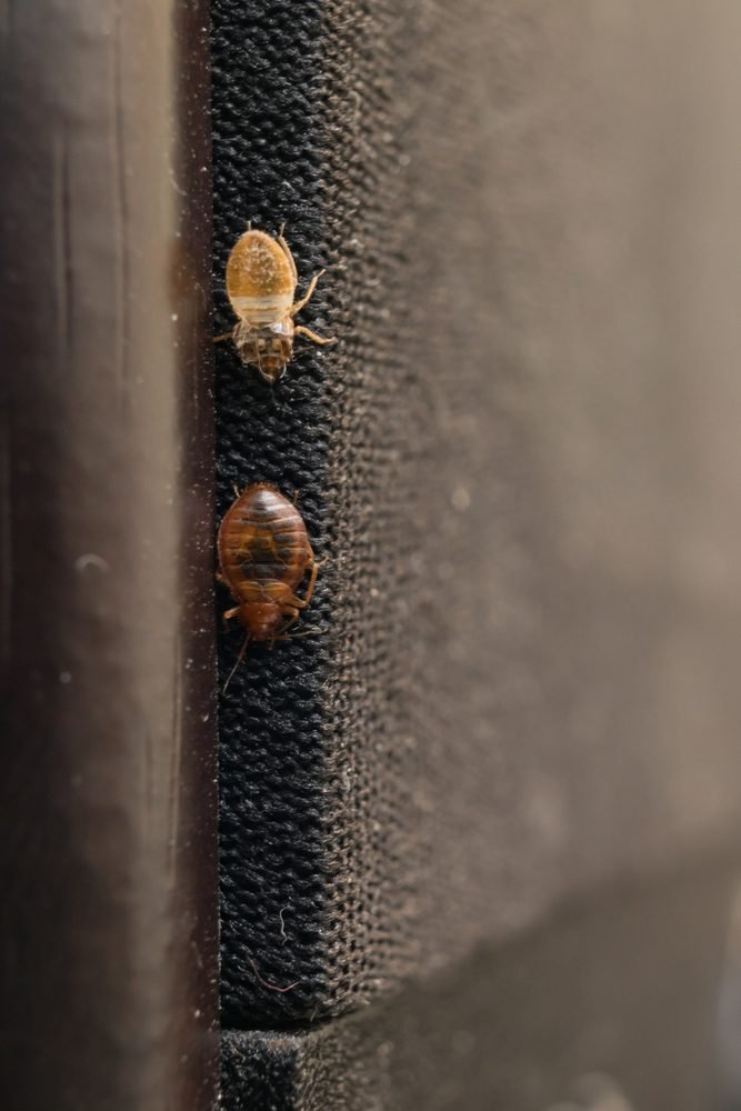 7 Things You Should Be Doing to Prevent Bed Bugs