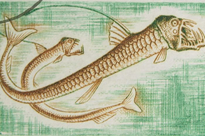 CONGO - CIRCA 1950s: A stamp printed in Congo showing Manylight Viperfish, circa 1950s