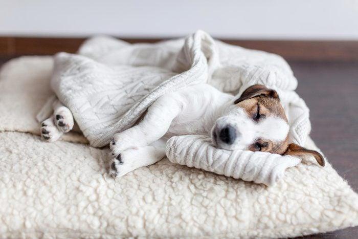 dog sleeping bed