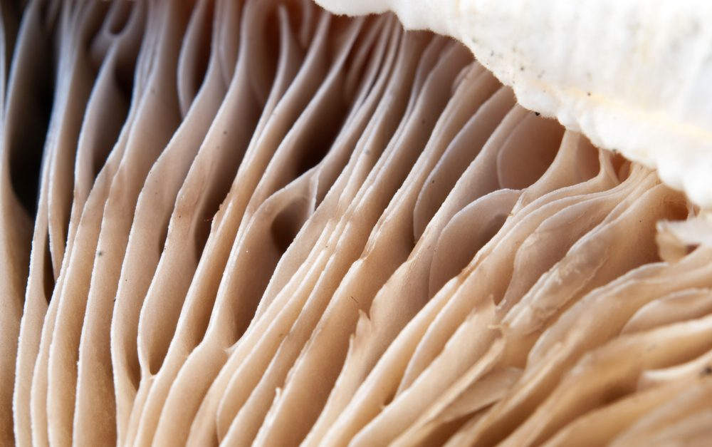 delicious mushrooms texture, extreme closeup photo