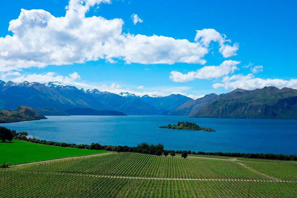 rippon winery, new zealand