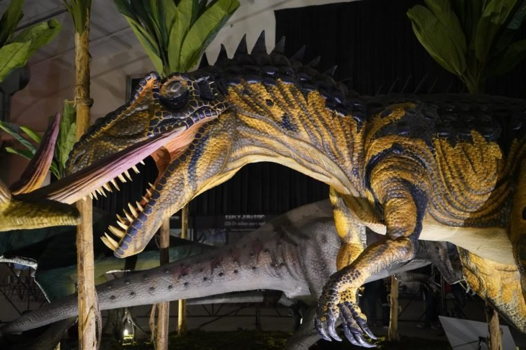 """SAN JOSE, CALIFORNIA - November 16, 2018. """"Jurassic Quest"""" is a visiting Dinosaur event with real life size dinosaurs and interactive exhibits, rides, and activities for children and adults."""
