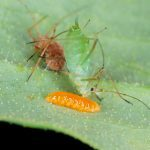 7 Bugs You Should Never Kill In Your Garden